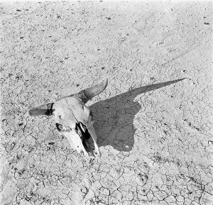arthur_rothstein_-_the_bleached_skull_of_a_steer_south_dakota_badlands_1936