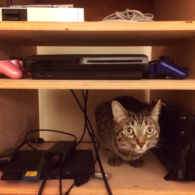 cats_in_videogames.jpg