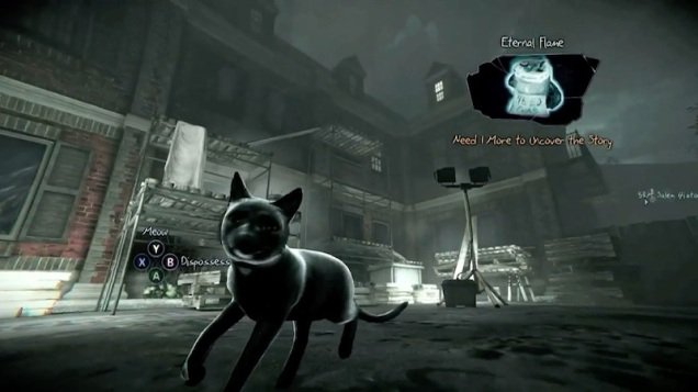 cat_of_the_week_rowan_oconner