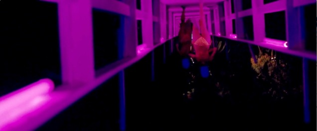 spring_breakers_frame_grab_26